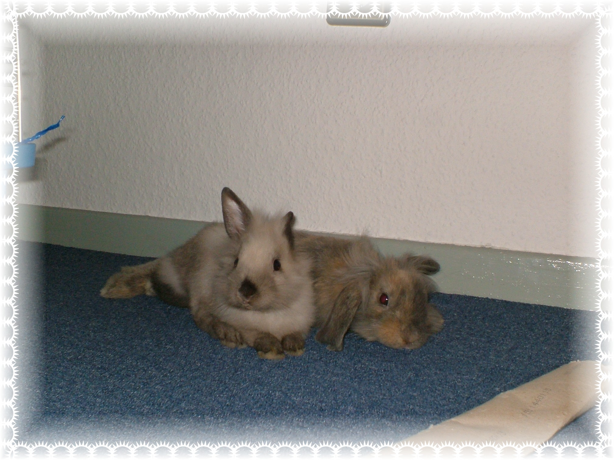 Bonnie & Balu